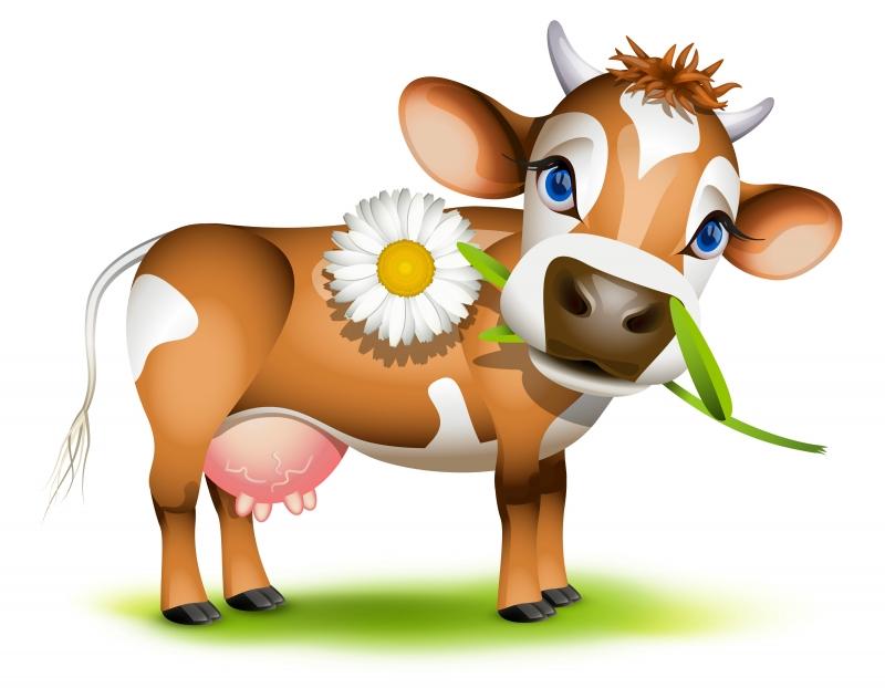 jersey-cow-dais1y